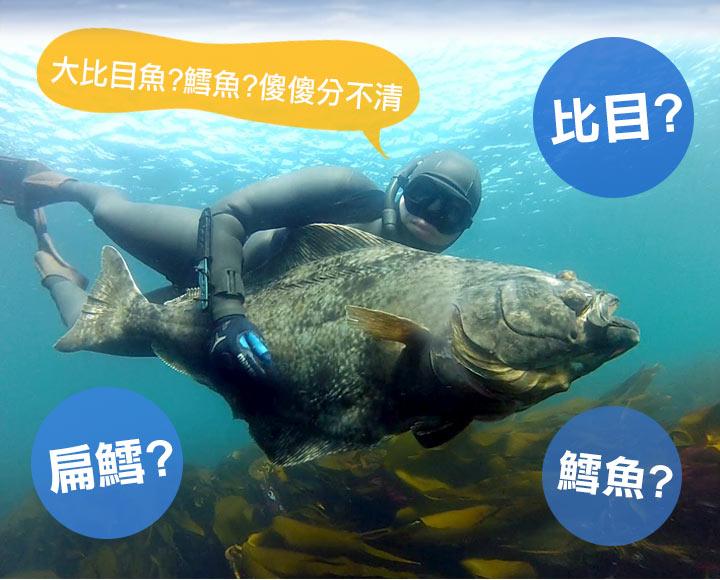 冰島大比目魚(扁鱈)400g_愛上鮮比臉還要大的牛排