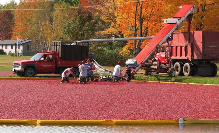 美國道地蔓越莓果乾