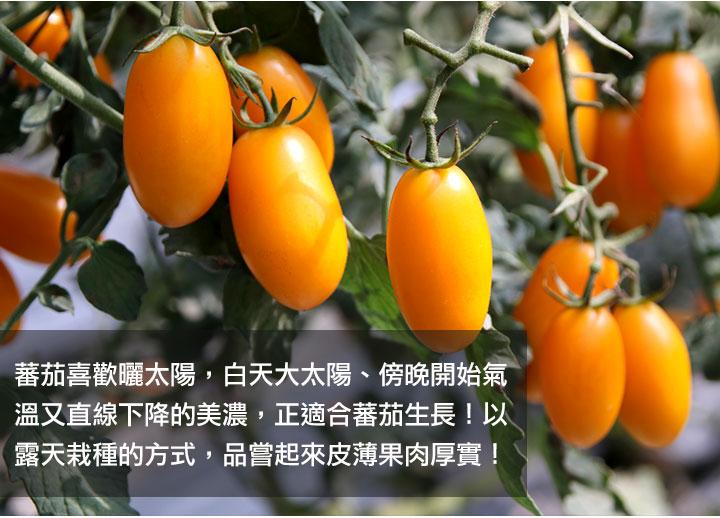 橙蜜香蜂蜜蕃茄乾