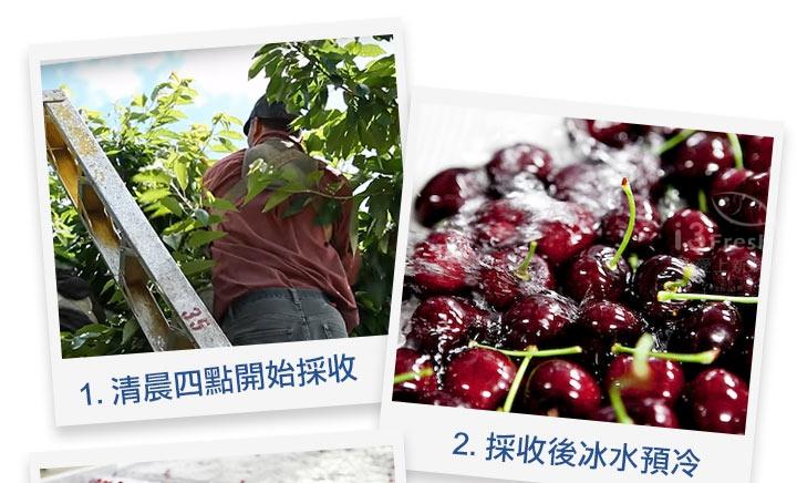 特選智利鮮採櫻桃