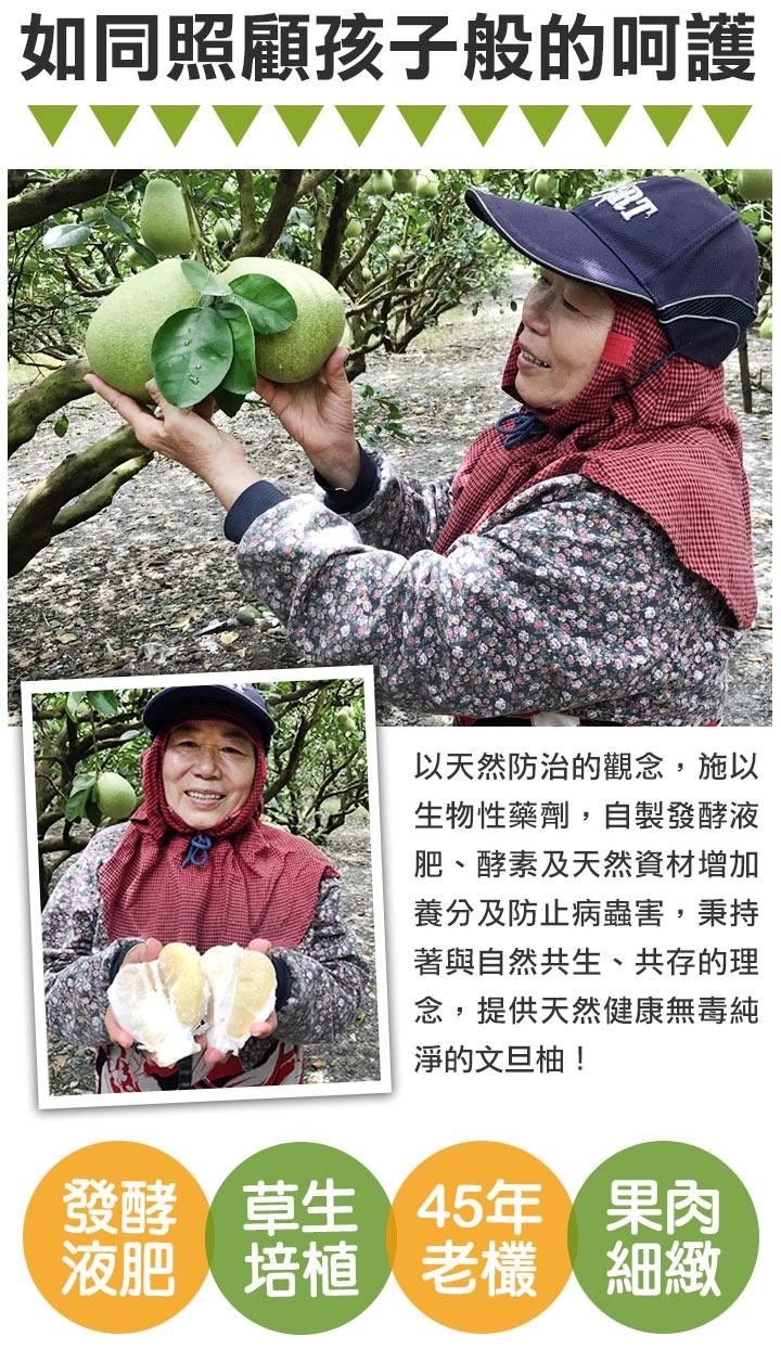 45年老欉總統文旦柚