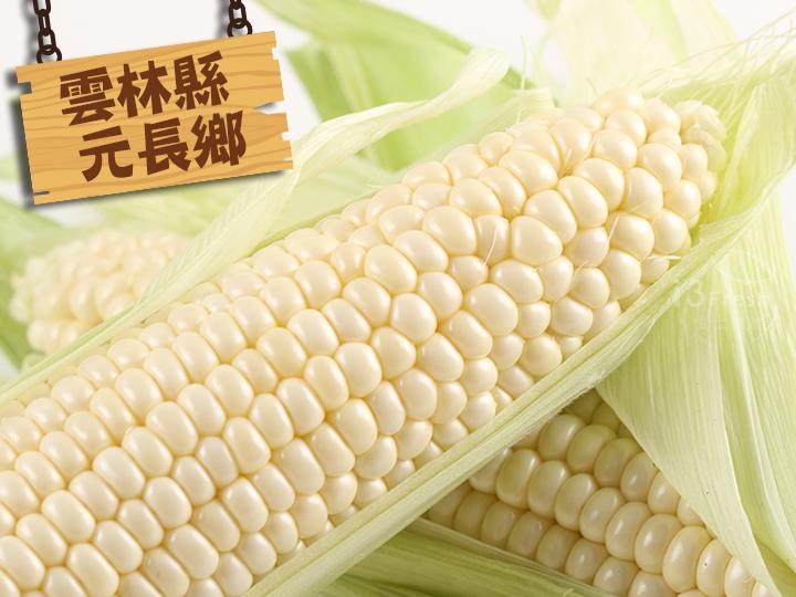 北海道白龍王水果玉米