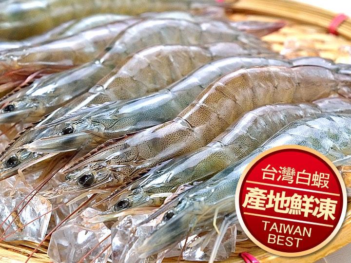 台灣活力白蝦