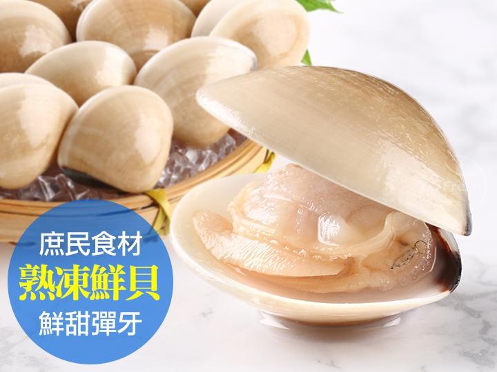 爪哇美人白玉貝