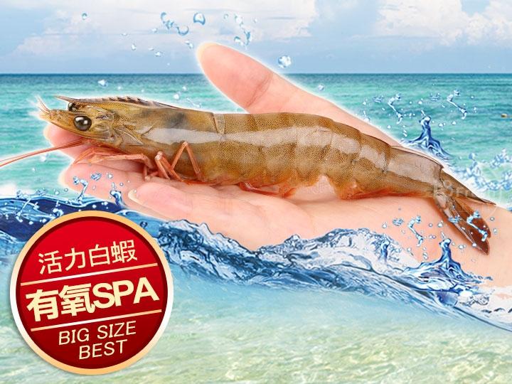 活力SPA特大白蝦