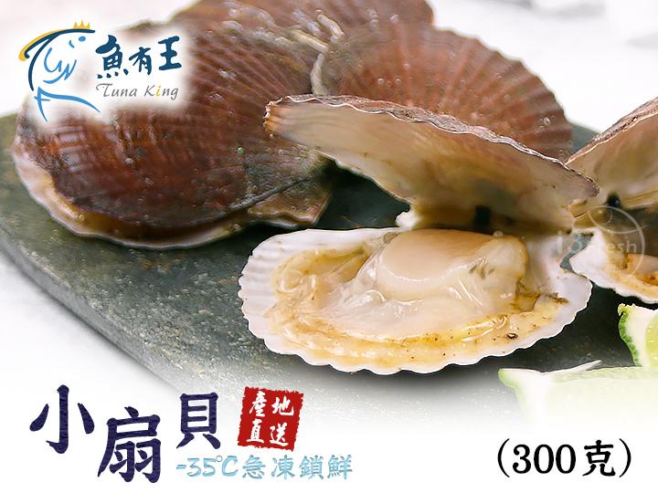 魚有王小扇貝